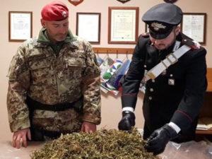 Droga: marijuana in una casa disabitata nel centro di San Luca