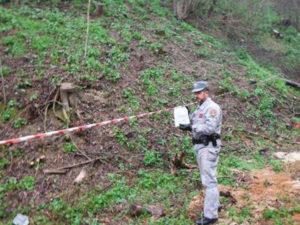 Taglio abusivo alberi, area 5.000 mq sequestrata a Bisignano
