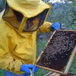 Regione: Coldiretti, rivedere il bando sull'apicoltura