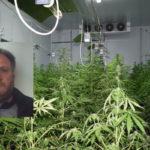 Droga: marijuana in un capannone, un arresto a Taurianova