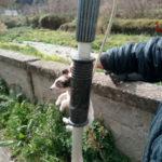 Cuccioli di cane in una discarica a Catanzaro, salvati dai Vigili