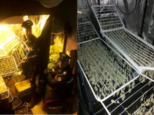 Droga: controlli Carabinieri e Polizia sul Tirreno cosentino