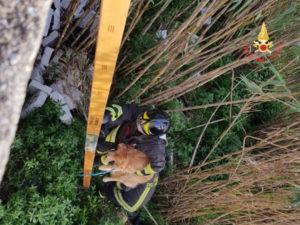 Cane salvato dai Vigili del fuoco a Catanzaro