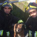 Lamezia: Cane salvato dai Vigili del fuoco  in via Marconi