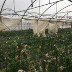 Maltempo: Coldiretti, danni ingenti nell'area del Lametino