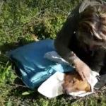Cane impiccato a Bovalino; la reazione del  movimento animalista calabrese