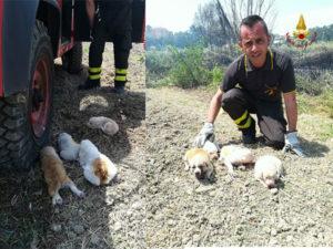 Incendi: cagnolini salvati dai Vigili Fuoco a Isola Capo Rizzuto