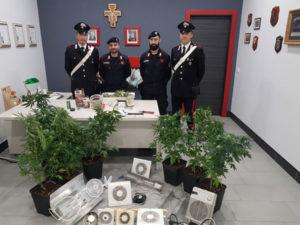 Droga: nel Cosentino marijuana nel sottotetto,arrestato 49enne