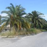Lamezia: protesta associazione Quartiere Capizzaglie