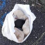 Quattro cuccioli soccorsi da cantonieri Anas nel Cosentino