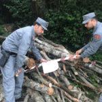 Due arresti per furto di legname nel Crotonese