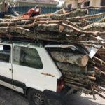 Furto legname: un arresto nel Cosentino