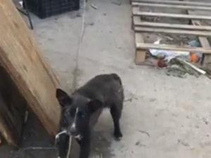 Maltrattamenti animali, 2 persone denunciate a Davoli