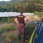 Droga: 89 mila piante di marijuana nel Vibonese, 7 arresti