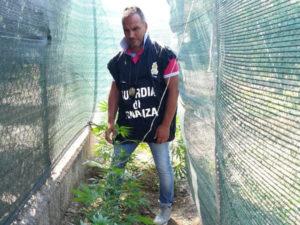 Droga: coltivava marijuana nel giardino, un arresto nel Cosentino
