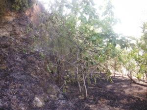 Incendi: Carabinieri Forestali denunciano 70enne