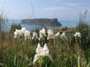 Ambiente: M5s, tutelare area spiaggia con gigli di mare