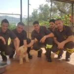 Lamezia: cane salvato dai Vigili del Fuoco in via della Rose