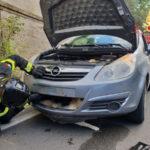 Piccolo cane investito da auto soccorso dai Vigili del Fuoco