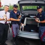 Animali: cagnetta e i suoi 7 cuccioli abbandonati in A1, salvati