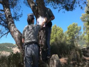 Incendi: pinete sotto sequestro nel Cosentino