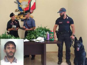 Droga: piante di marijuana in casa, arresto a Taurianova