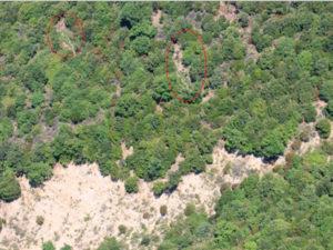 Droga: scoperte e distrutte tre piantagioni in Aspromonte
