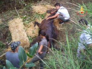 Cavallo precipita in un fosso, salvato dai Vigili del Fuoco