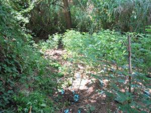 Droga: arresti Vibo, extracomunitari per coltivare marijuana