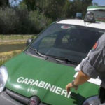 Bracconaggio: cacciatore denunciato dai Carabinieri nel Crotonese