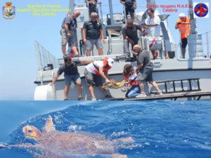 Torna in mare tartaruga salvata dal eparto Operativo Aeronavale Gdf