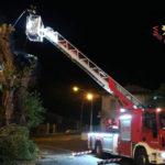 Chiaravalle Centrale, incendiato nella notte albero secolare