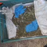 Droga: due piantagioni scoperte dai Carabinieri nel Vibonese