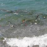Lamezia: Gigliotti(In), nel mare della Marinella galleggia di tutto