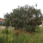 """Lamezia: Cutrì, """"Degrado inaccettabile al parco di Fronti"""""""