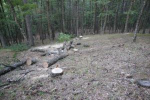 Tagliava alberi abusivamente, arrestato e scarcerato