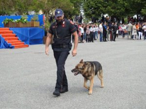 Vibo Valentia: È morto Acrab, il cane dell'Arma