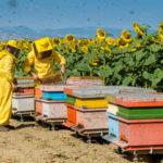 Regione: biodiversita' in apicoltura, arrivano le graduatorie