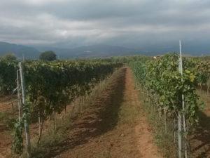 """Vino: Coldiretti Calabria, """"buona la fotografia di agosto"""""""
