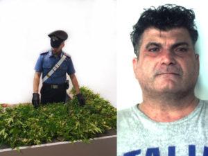 Droga: coltiva 190 piante marijuana, arrestato a Reggio Calabria