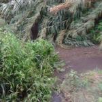 Lamezia: Cristiano(Mtl), emergenza torrenti a rischio incolumità cittadini