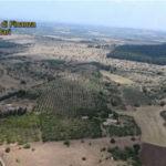 Droga: piantagione di marijuana all'ombra di Castel del Monte