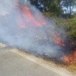 Incendi: bosco in fiamme e altri roghi nel Cosentino