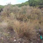Catanzaro: cittadini e associazioni puliranno la spiaggia dai rifiuti
