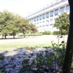 """Lamezia: In e Ml, """"perimetro ospedaliero in abbandono ambientale"""""""