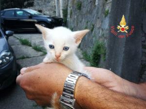 Catanzaro: Vigili del Fuoco salvano un gattino in Via Carlo V