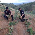 Droga: in casa 2 quintali di marijuana, arresto nel Cosentino