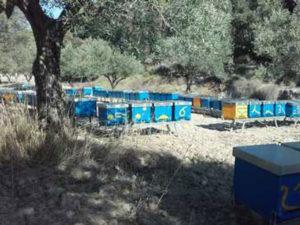 Api da Sicilia in Calabria, sequestrate 135 arnie, 1 denuncia