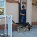 Droga: controlli davanti scuola a Catanzaro, dosi in cortile