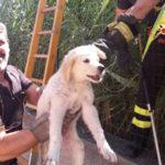 Cucciolo di cane recuperato dai Vigili del Fuoco a Sellia Marina